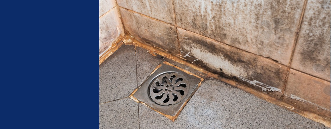 Is There Mold In Your Shower